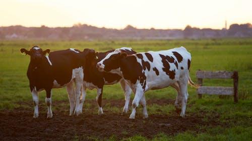 agrarisch beroep
